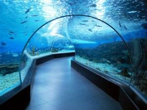 www-city-discovery-com_ocean-park